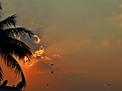 Pleasant And Peaceful, Safe and Secure Weekend (sureba67) Tags: weekend skywatch birds birdinflight nature sundown sunset dusk sureba67 babusuresh photography sonydsch200