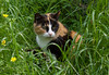 Nell'erba... una bellezza (fabrizio_buoso) Tags: felini felinos chats cat cats chat gatti gatos gatto gattiitaliani gattini