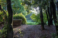 point of view (Mancini photography) Tags: park rays light shadows nature view green