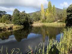 Platypus habitat (Baractus) Tags: hamletdowns fentonbury tasmania australia john oates inala nature tours