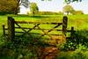 Walk around Aqualate Mere (Ugborough Exile) Tags: newport shropshire england uk sony a6300 2018 midlands