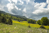 Montagne - Vercors (Nik2o) Tags: vassieuxenvercors france fr auvergnerhônealpes hdr manfrotto nikon d7500 apsc sky clouds grass herbe tree arbres vercors nature outdoor champ vert green sigma 1020mm