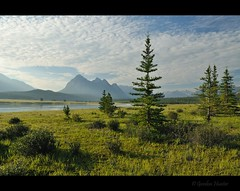 Preacher's Point (Gordon Hunter) Tags: nature natural wilderness forest trees morning outdoor outside country abraham lake rockies rocky mountains ab alberta canada gordon hunter nikon d5000 summer comfort beauty simple