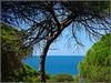 Mazagón (Huelva) (Spain) (sky_hlv) Tags: mazagón huelva andalucía andalusia españa spain europe europa playa beach praia costadelaluz oceanoatlántico atlanticocean pinares