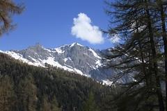 Ovronnaz (bulbocode909) Tags: valais suisse ovronnaz montagnes nature arbres forêts mélèzes nuages paysages neige printemps vert bleu hautdecry branches groupenuagesetciel