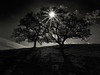 Two Trees and The Star (StefanB) Tags: california geotag hiking outdoor sierravista tree treescape 2017 1235mm star sierravistaopenspace mood two