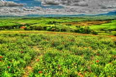 Primavera (giannipiras555) Tags: toscana fiori verde colline panorama landscape nuvole colori natura alberi