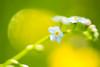 (Koberek@) Tags: sulików koberek sony slt 37 poland polska przyroda macro makro minolta 5017 dolnyśląsk landscape lower silesia light wild wald wiosna dof bokeh outdoor