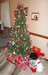 2013 Christmas Tree with Stabbur (Stabbur's Master) Tags: cats kitty kitten christmas christmasdecorations christmasgifts christmastree christmaspresents catunderchristmastree