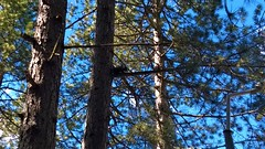 Zlatibor Squirel (sanDr.a.92) Tags: mountain mascot animal squirel tree sky nature forest wood branch climb ngc