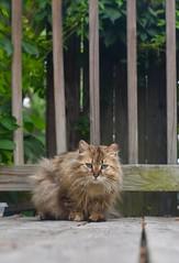 Meet Mac (trspencer0112) Tags: color green outdoor naturallight 50mm d3400 nikond3400 nikon cat