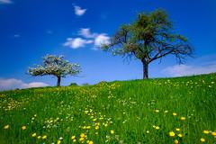 S P R I N G (frank-heinen-photographer) Tags: spring landscape ©wwwfrankheinenphotographerde germany eifel nrw wolkenstimmung v5profilterholder fujifilm xf1024mmf4rois agriculture irnd64 green fujifilmxt2 outdoor biological travel cloud gnd809medium hdcpl sky feld frühling mood wolken field