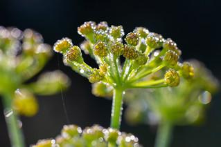 Gotas sobre plantas