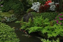 Kyoto Jonan-gu Muromachi-no-niwa Garden (maco-nonch★R) Tags: japanischer japanesephotographer japon japanese japonés japón japanesegarden koi jonangu shrine stream 日本