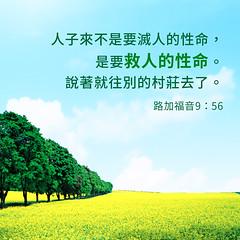 圣经金句- 人子来不是要灭人的性命 (追逐晨星) Tags: 金句 圣经金句 金句卡片