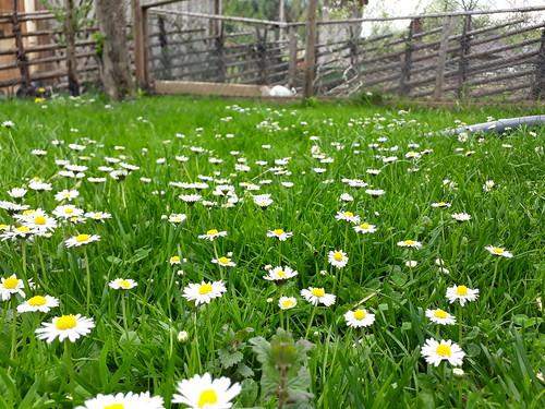 Frühling 🌼🌼🌼 Endlich😊😊