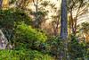 Photo (Antonino Tranchina) Tags: ustica bosco natura foglie albero piante riserva terrestre verde