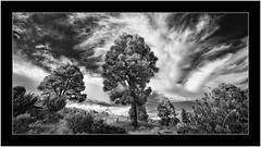 Garafía, La Palma,Sony A7R IR, Voightländer Heliar Hyper Wide 10mm/5.6 (Bartonio) Tags: canaryislands clouds garafía infrared ir islascanarias lapalma landscape nature nubes paisaje pinar pine pino sonya7rir tree voightländer 10mm56