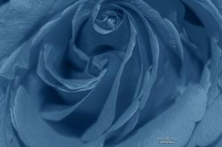 true blue ...