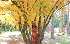 Autumn leaves (Poytr) Tags: mountwilson yellowleaves yellow girl chinagirl chinesegirl beautifulwoman tree garden bluemountains nsw australia fall breenholdgardens chensmallbird