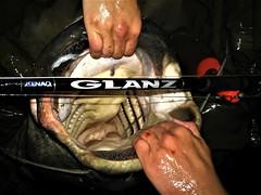 GLANZ B80-25X (ZENAQ) Tags: zenaq glanz european catfish