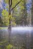Seasonal Pond Morning Mist (optimalfocusphotography) Tags: northerncalifornia california spring landscape yosemite yosemitenationalpark nationalpark reflections yosemitenp reflection sierranevada nature usa