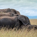 Fourfold elephant family, moments that are in my heart forever! Thank you Ralf thumbnail