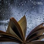 Old Book and Rain thumbnail