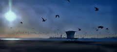 Spring Winds (beachpeepsrus) Tags: beach birds beachfront bay blue california clouds city whiteisland water wave wind white w