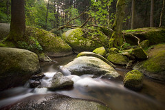 green rocks (Lena Held) Tags: upperpalatinate bavaria germany travel global world nature natural lansdscape scape land square squareformat scarf rocks river wood forest woodland outside outdoor light lights plants trees longexposure exposure water waterloo waterban stones canon 5dsr weitwinkel vollformat