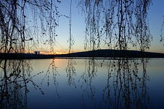 Curtain (brittajohansson) Tags: lake water evening sunset tree branches spring leaves buds birches hill clouds curtain nature landscape