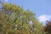 Tree / 木(き) (TANAKA Juuyoh (田中十洋)) Tags: 5d markii hi high res hires resolution 高精細 高画質 tochigi kanuma senjusan kouen park 栃木 鹿沼 とちぎ かぬま 千手山公園 せんじゅさん こうえん 樹 木 緑