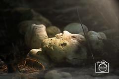 Waldboden (DJR-FOTO) Tags: wald woods pilz mushroom nebel fog affinity affinityphoto outdoor outside outdoors forrest sunlight natur nature naturallight sonnenlicht 4kuhd deutschland dortmund djrfoto djr