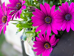 Balcony flowers (Tomasz B.) Tags: flower flowers balcony beauty color colorful isolated plant hanging background garden summer pot green nature spring leaf blossom petal bloom outdoor box beautiful floral season window botanical flowerbed plants red white blue violet purple