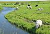 Sunny day (Shantanu_NL) Tags: fishing viallges marken volendum netherlands hollands europ holidays traveller summer