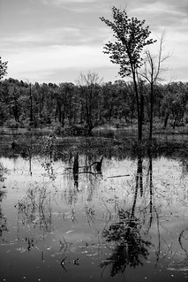 Trees in Wetlands, Stewart State Forest, New York
