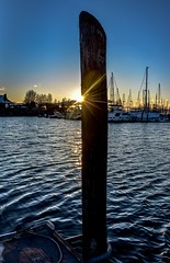 Nautical sunstar (Christie : Colour & Light Collection) Tags: piling post dock sunstar marina harbour boats masts blue hour sailboats evening ocean seascape outdoors sun twinkle