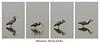 Monsieur Héron pêche... / Gone fishing... (Pentax_clic) Tags: peche • vaudreuil kr 2018 anse heron warren fish pentax poisson spring robert printemps quebec avril imgp4844