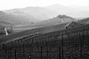waiting for spring to come (drzoidbergh) Tags: toskana italien wineyard orchard rural blackandwhite landscape