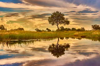 Shore of the Okavango River, Botswana