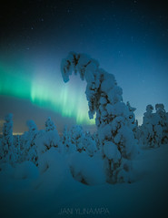 Winter tree (janiylinampa) Tags: northernlights auroraborealis aurora auroras revontulet nordlicht polarlicht nordlys norrsken rovaniemi lapland finland lappi suomi laponie laponia lappland finnland white green blue trees stars nightphotography ice snow winter talvi