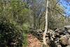 nature (bulbocode909) Tags: valais suisse printemps nature forêts montagnes sentiers murs arbres pierres feuilles vert bleu