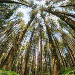 Tree Hunt thumbnail
