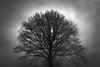 one (Neko! Neko! Neko!) Tags: blackandwhite blackwhite bw mono monochrome tree sky one solitude