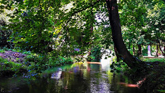 Hűs árnyak csordogáló patakja (Szombathely) (milankalman) Tags: creek water tree park green nature spring
