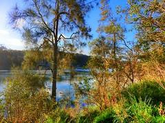 Tranquility by the lake IV (elphweb) Tags: hdr highdynamicrange nsw australia tree trees forest bush woods wood lake lakeside