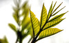 fractal expressions (DeZ - photolores) Tags: macro leafs fractal details bokeh hdr nikon nikond610 tamron90mmf28 dez