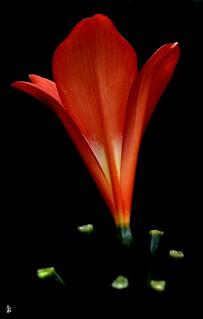 _DSC0762 - Fleur