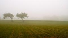 Spring Mist (bimbler2009) Tags: fujifilms9900w mist fog grass tree landscape field