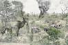 African Elephants (pixelarized) Tags: elephant olifant doubleexposure double zuidafrika wildlife south africa krugerpark